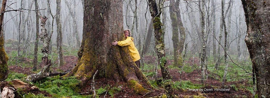 Nova Scotia Trees