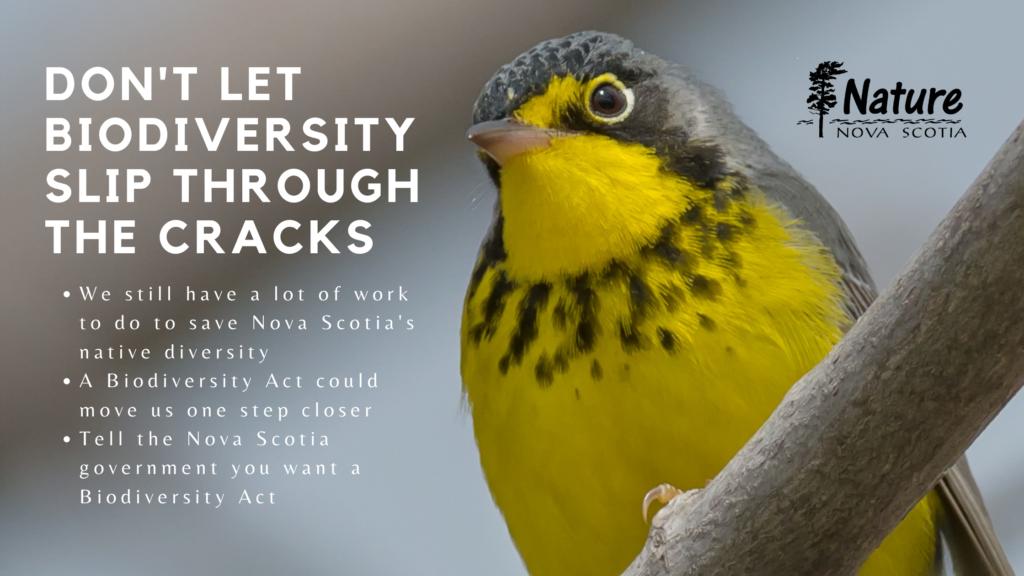 Nova Scotia Once Again Close to Enacting Biodiversity Legislation. Don't Let it Slip through the Cracks!